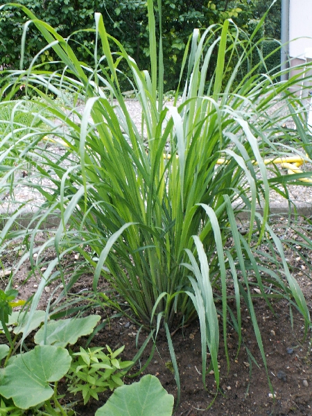 plante verte a longue tige