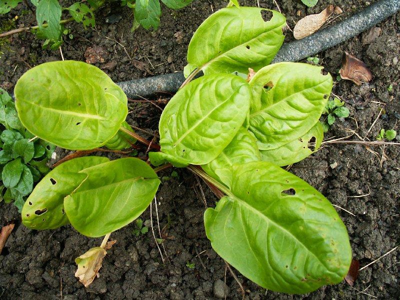 Astuces de jardinage mon jardin potager légumes du potager fruits